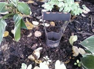 Bulbplanting