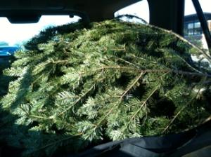 Saturday 3 p.m.: A Trunk Full of Tree